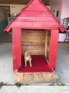 Niagara County SPCA dog house haus2home